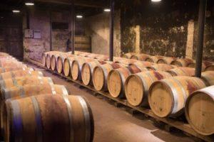 Gamay Noir druen fra Beaujolais