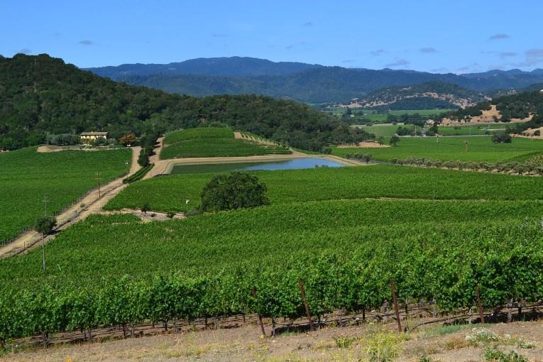 Californisk vin
