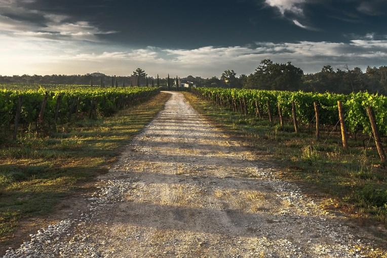 Navarra vin