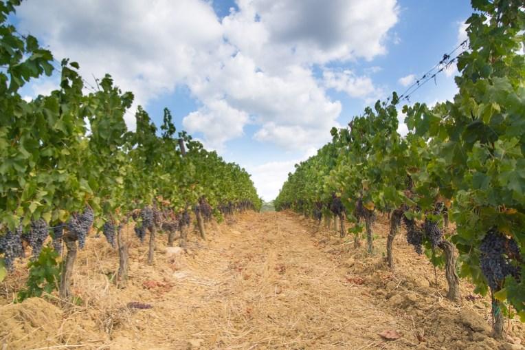 Puglia vin