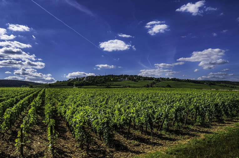 Rhône vin