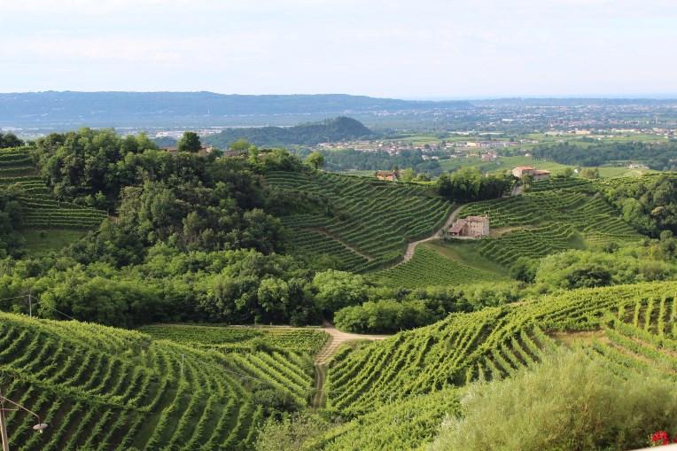 Veneto vin